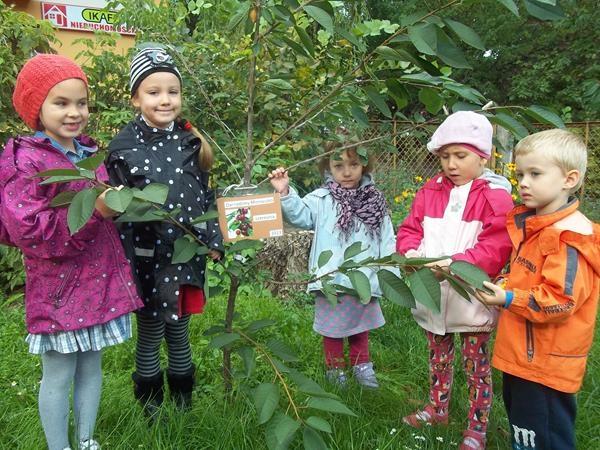 W naszym ogródeczku – grupa VII