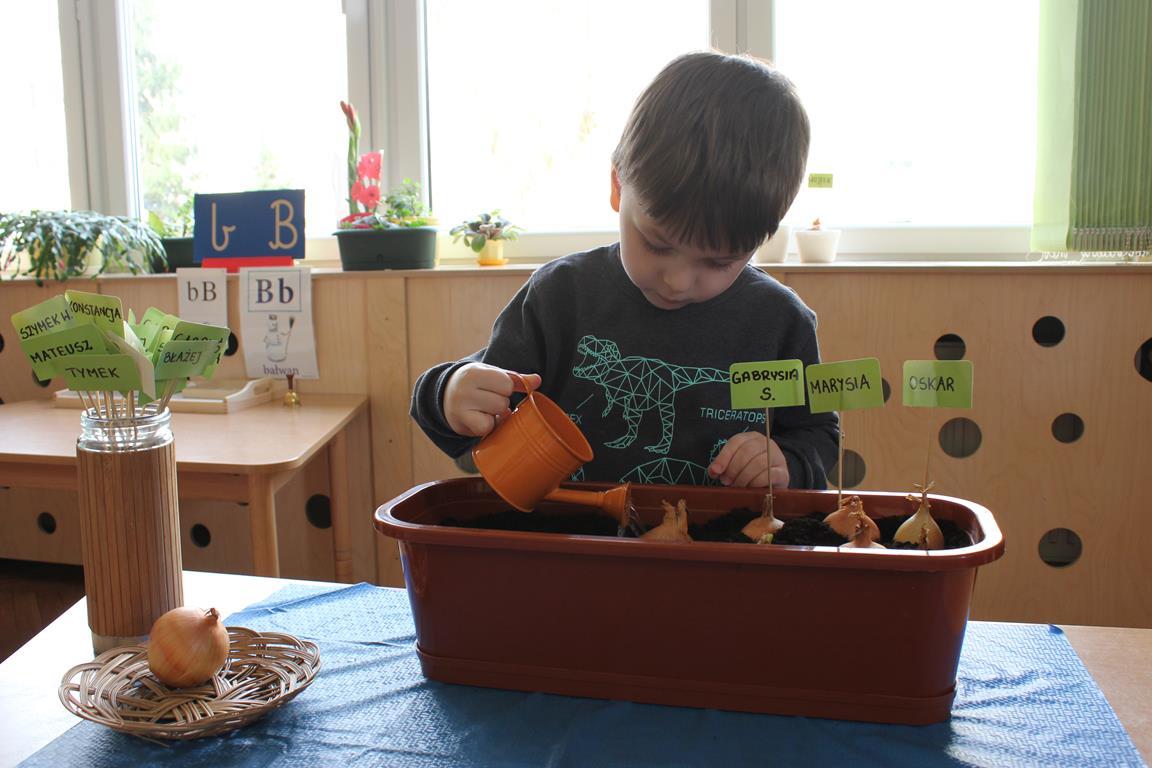 Sadzenie cebuli w grupie III