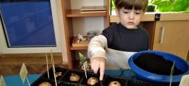 Sadzenie cebuli w grupie II