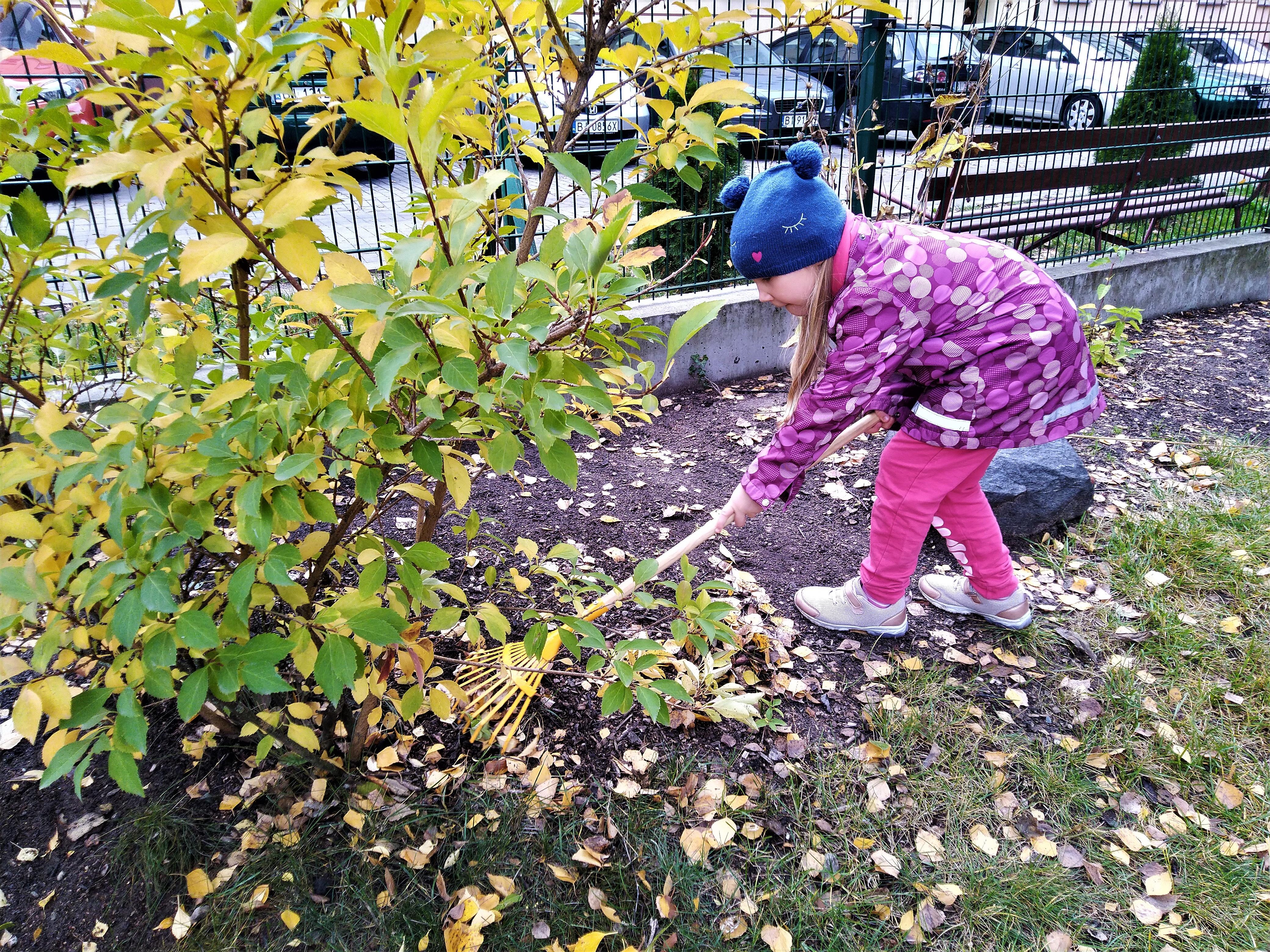 Jesienne porządki w ogrodzie przedszkolnym