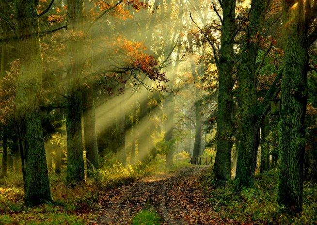 """""""Gdzie mieszka leśne echo"""" – bajka muzyczna online"""